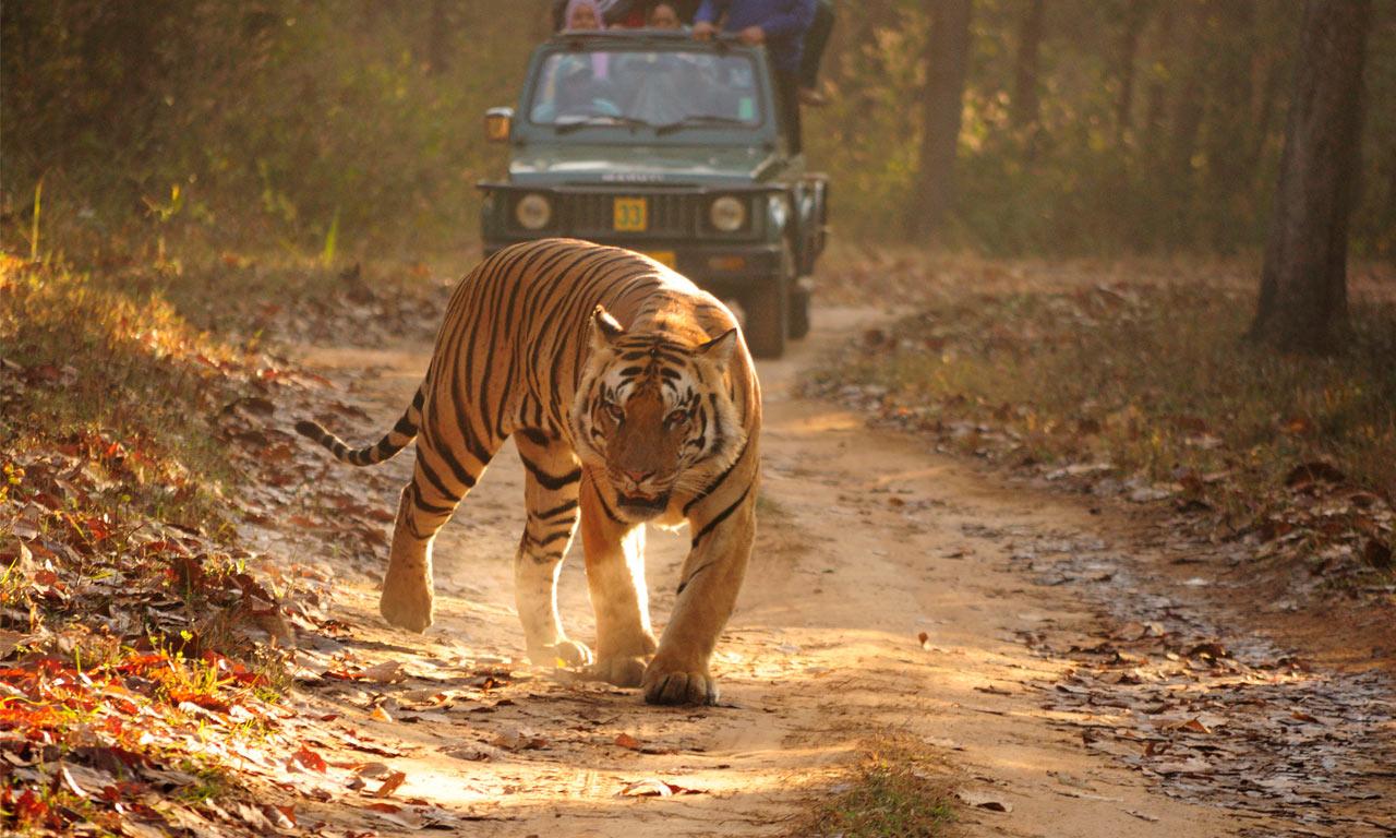 Jungle_Safari_Kanha.jpg