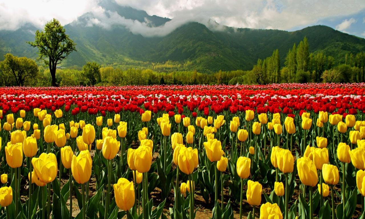 Mughal-Garden-Srinagar.jpg