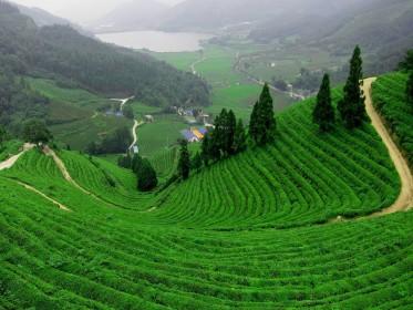 Darjeeling_Gangtok_Tours.jpg