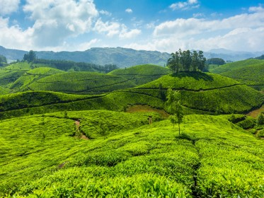 Famous_Hill_Stations_Munnar.jpg