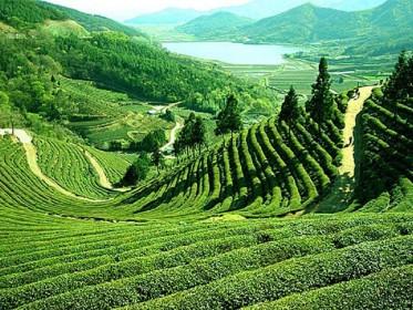 LTC_Package_Darjeeling.jpg
